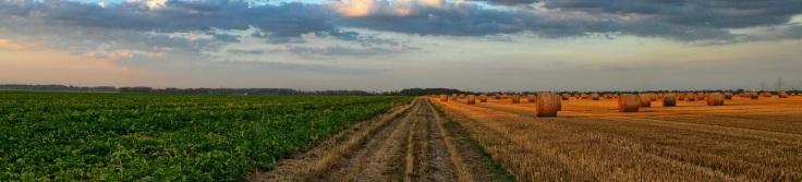 agricultura1884x429